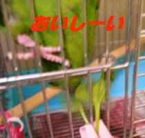 20060425181902.jpg