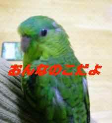 20060429154251.jpg