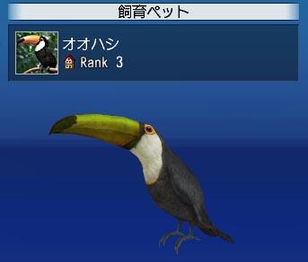 オオハシ(緑)