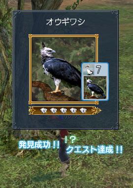 オウギワシ