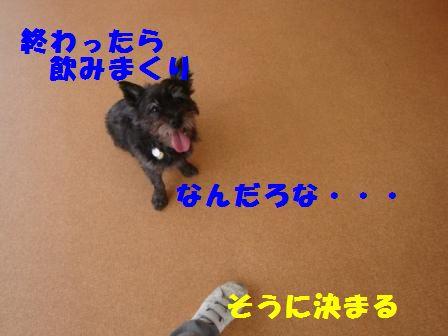 aaa-dr4.jpg