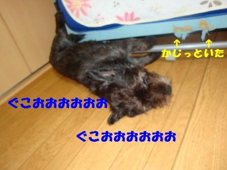 yoru14.jpg