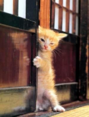 今日のおまけ☆おもしろ画像は猫