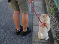 散歩中の待て