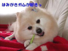 歯磨きガムが好きっ