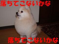 ハンバーグ2
