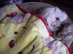 ひる寝のハンナ