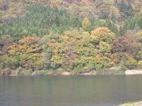 最上川の紅葉