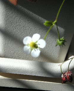 wildberry.jpg