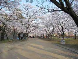 城跡公園  001 s1
