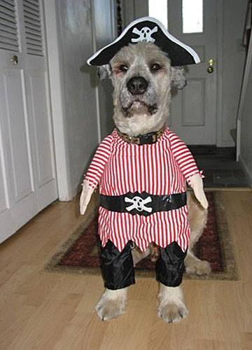 costumedogs200