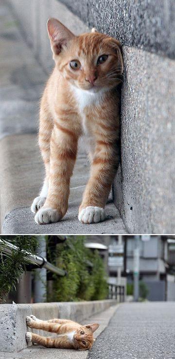 sidecat1.jpg