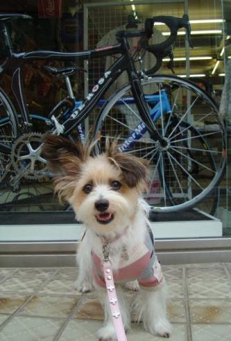 DE ROSA の自転車!