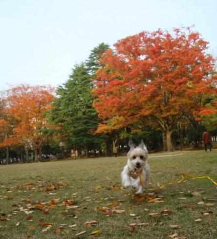 中央公園~走る