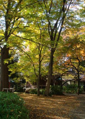 春日神社の木々