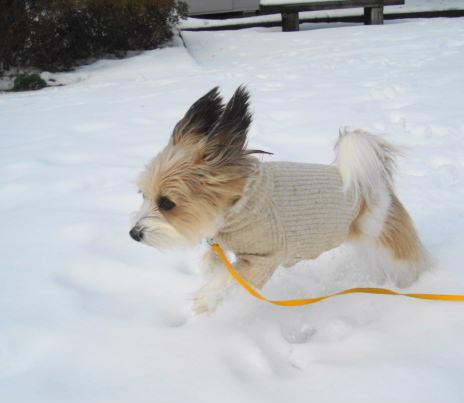 雪の上を走る