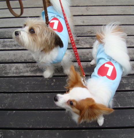 見上げる犬たち
