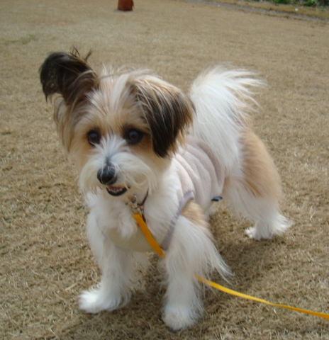 芝生に立つ犬