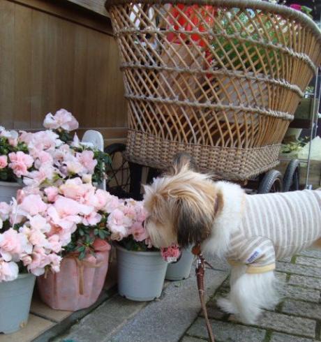 花屋の前で
