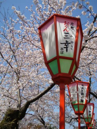 桜とぼんぼり