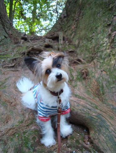巨大な木の幹の上で
