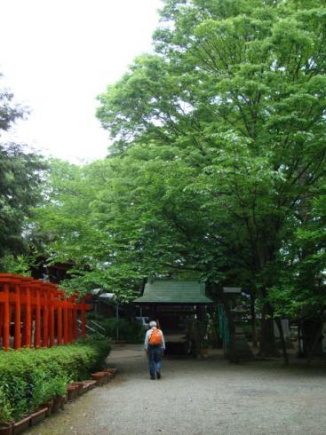 新緑の春日神社
