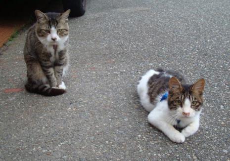 にらむネコたち