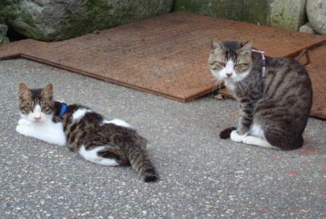 にらみ続けるネコたち