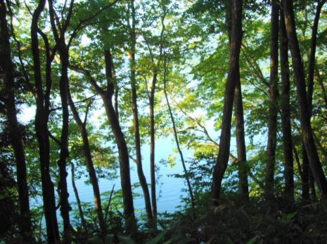 道から湖を見る