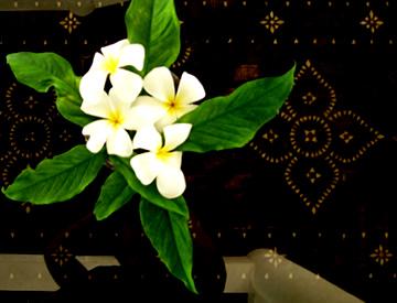 cebu_flower4.jpg