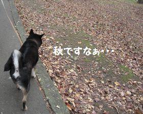 cosuke-011.jpg