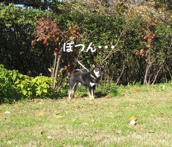 cosuke-015.jpg