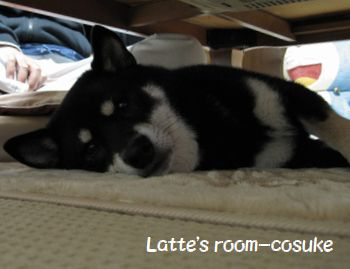 cosuke-048.jpg