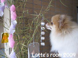 latte-1040_20090707225435.jpg
