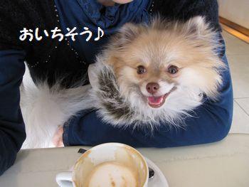 latte-255.jpg