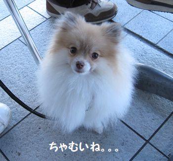 latteえ-351.jpg