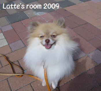 latte-477.jpg