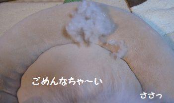 latte-521.jpg