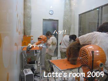 latte-532.jpg