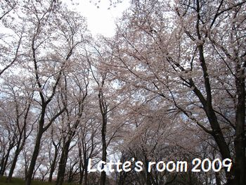 latte-592.jpg