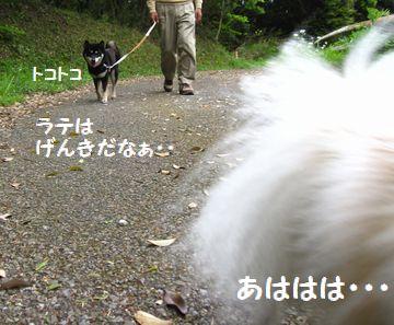 latte-680.jpg