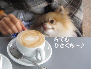 latte-835.jpg
