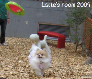 latte-932.jpg
