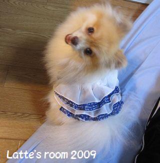 latte-986.jpg