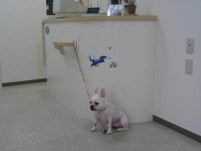 動物病院受付