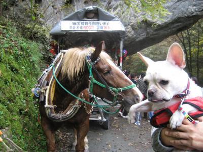 馬とぷう4