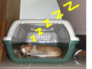 snap_puku123_200951214717.jpg