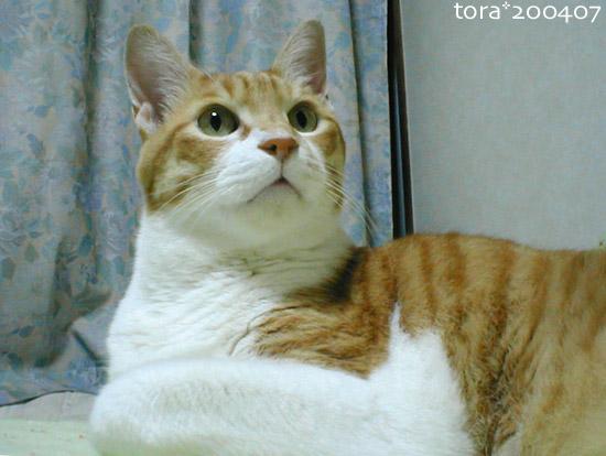 tora04-07-22.jpg
