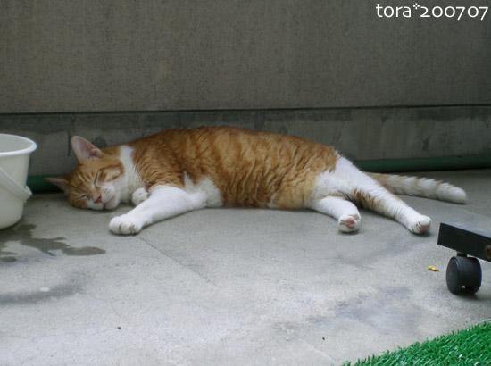 tora07-07-16.jpg
