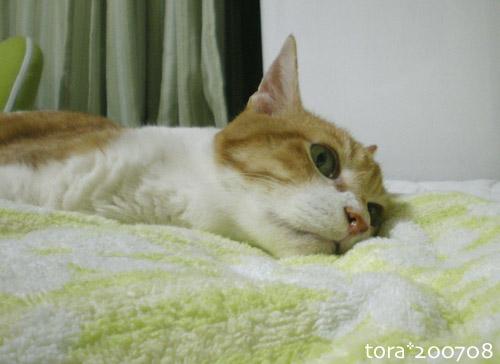 tora07-08-13.jpg